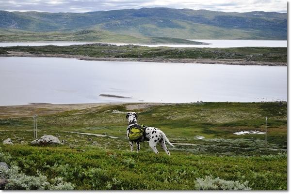 April - Norge/Norsk Sommertur-2010-del1-070